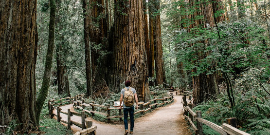 Hiker, Redwood Trees, Muir Woods